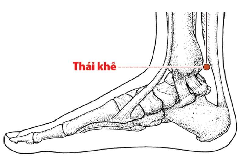 Vị trí chính xác của huyệt Thái Khê trên cơ thể bạn