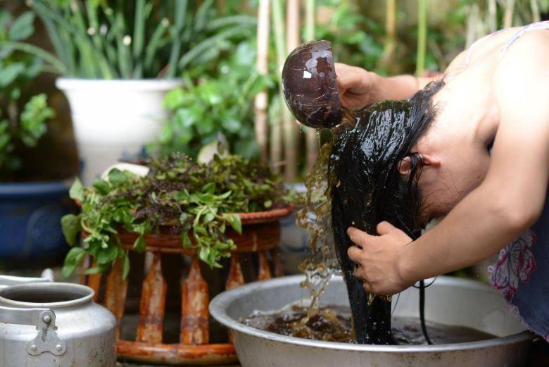 Hương nhu kháng khuẩn và trị gàu