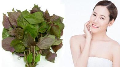 Photo of 4 cách trị mụn bằng lá tía tô đơn giản tại nhà cho làn da khỏe đẹp
